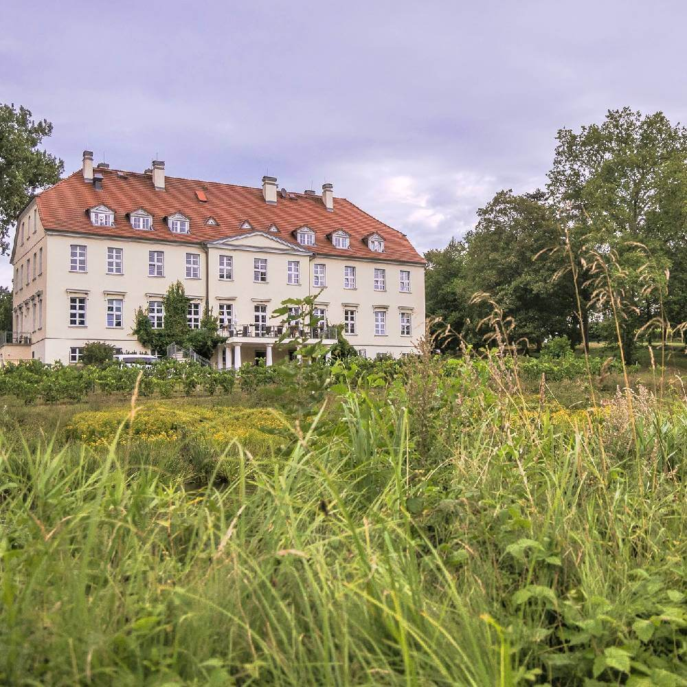 Grasbeißer Weizengras Likör Schloss Rattey Inselmühle Usedom 4